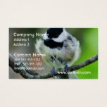 Black Capped Chickadee Bird Business Card
