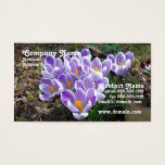 Crocus Business Card