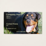 Friendly Rottweiler Dog Business Card