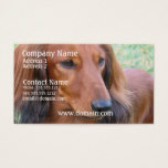 Long Hair Dachshund Business Card